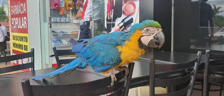 Arara pousa em restaurante e é capturada pela PM, em Águas Claras
